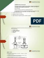 valvulas_UNI.pdf