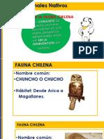 2B_CienciasFaunaChilena