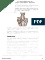 ¿Qué Es La Miología_ Características Principales - Lifeder