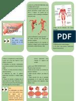 Qué Es El Sistema Muscular