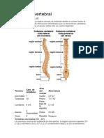 anatomía columna