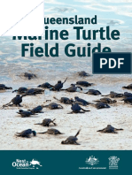 Marine Turtle Field Guide