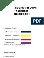Derivados de La Capa Germinal
