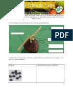 identificacion y clasificacion.doc