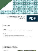 CADENA PRODUCTIVA DE LOS CÍTRICOS.pptx