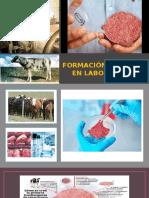 Formación de Carne en Laboratorio