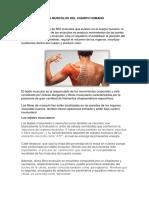 Los Musculos Del Cuerpo Humano