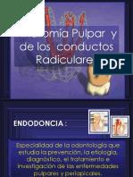 Anatomia de Los Conducto Radiculares f 1210034346752830 8