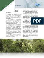 Como La Contaminación Pone en Peligro a Los Bosques Tropicales
