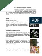 Animales y Plantas en Peligro de Extinción de Guatemala