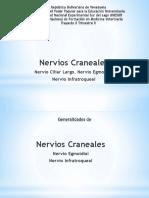 Nervio Trigémino y Nasociliar
