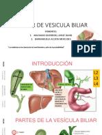 Cancer de Vesicula Biliar
