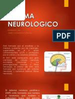 14. Sistema Neurologico