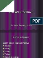 Organ Respirasi