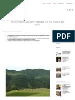 30 Mil Hectáreas Reforestadas en Los Andes Del Perú