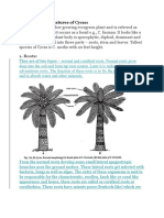 Morphological Features of Cycas