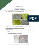 Taller Lab-BC-2012II.pdf