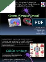 Sistema Nervioso Central Exposicion Fisiologia Grupo 1