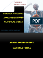 Practica Digestivo Histologia