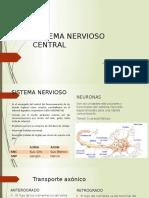 sistema nervioso cental