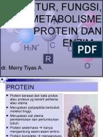 Struktur, Fungsi Protein Dan Enzim