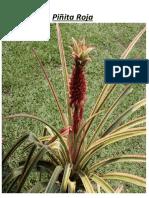 plantas aaron.docx