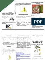 234495692-Proyecto-Cascara-de-Platano.docx