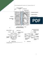 16 SPINAL Epidural Caudal Block Gambar Oke