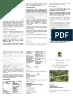 TRIPTICO JULIO.pdf