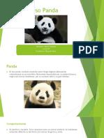 Oso Panda.pptx
