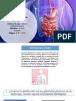 Diapositivas de Seminario 1 de Fisiología humana
