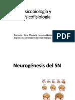 Estructura Del Sistema Nervioso (1)