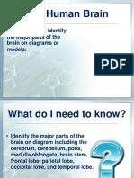 L.14.26 Human Brain Module