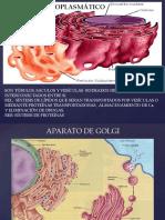 Diap Unidad 13 Apa Golgi-liso-perox