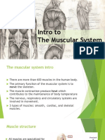 m5 intro muscular system