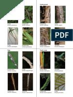 Lizard-Cards-Color done.pdf