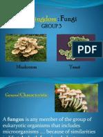 Kingdom Fungi New Microsoft Office PowerPoint Presentation (2)