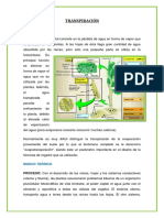 INFORME DE MAIZ TRANSPIRACION.docx