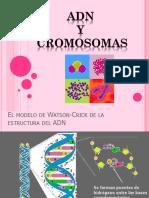 PPT CROMOSOMAS