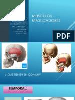musculos masticadores (2).pdf