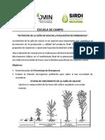 Plant  nutrition module