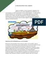 Ciclo Bioquimico Del Carbono