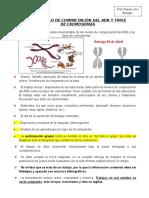 Modelo Niveles de Compactación Del ADN