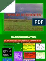 12820889-Nutrientes.ppt