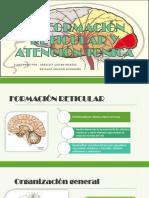 La Formacin Reticular y El Sistema Lmbico1 150603045559 Lva1 App6891 1 Neuro 1007