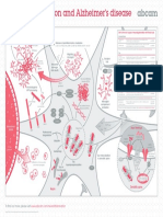 Neuroinflammation and Alzheimers Disease Poster