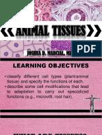 3.-ANIMALTISSUES