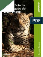 INFORME El Sacrificio de Los Bosques Del Gran Chaco FINAL