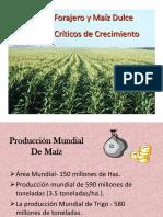 Parte 4- Estados criticos del Maiz.pptx
