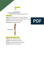 Musculatura de La Pierna (1)